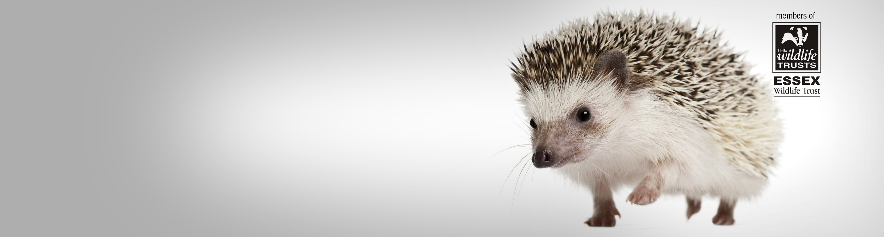 VISIT US AT HEDGEHOG HOUSE AND FIND OUT WHAT WE CAN DO FOR YOU AND YOUR BUSINESS